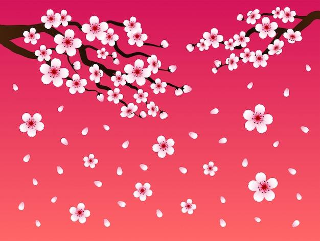 Sakura flores sobre fondo rosa