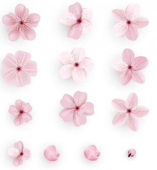 Sakura realista o flor de cerezo