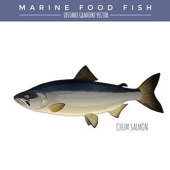 Salmón chum. comida marina pescado