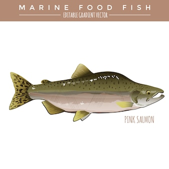 Salmón rosado. comida marina pescado