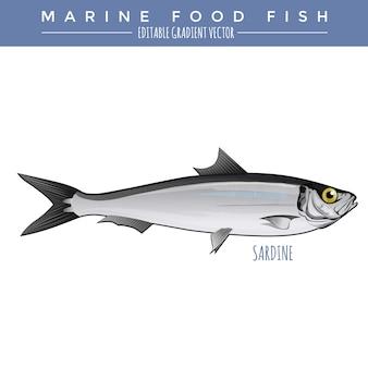 Sardina. comida marina pescado