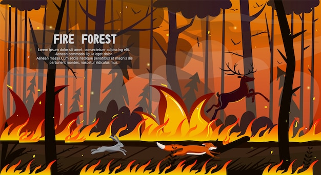Scary animals fox hare deer run in forest fire
