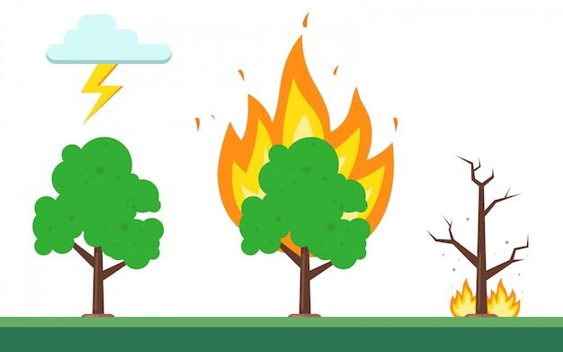 Secuencia de fuego en el bosque