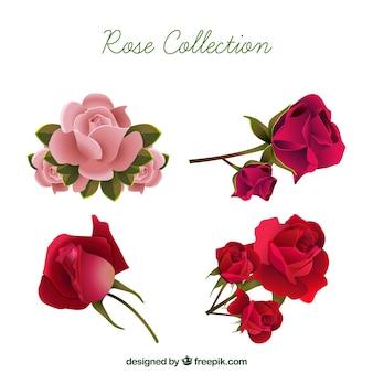 Selección realista de rosas bonitas