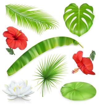 Selva. conjunto de hojas y flores. plantas tropicales. iconos