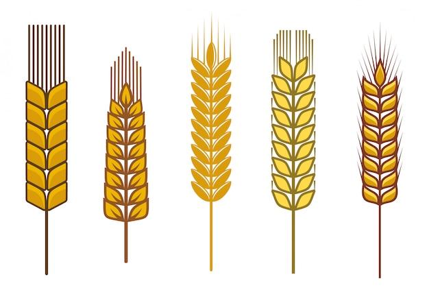 Semillas de cereales y símbolos aislados en blanco