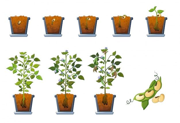 Semillas de semillas de soja brotan en conjunto de iconos de olla