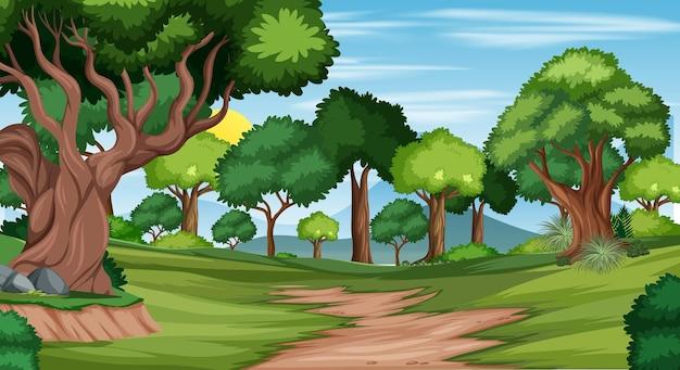 Sendero en la escena del paisaje forestal.