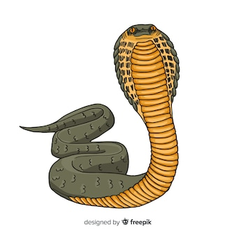 Serpiente realista dibujada a mano