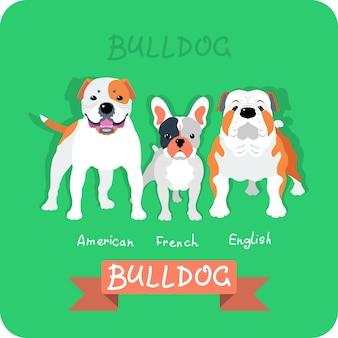 Set 3 bulldogs diseño plano.