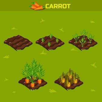 Set 9. etapa isométrica de crecimiento zanahoria