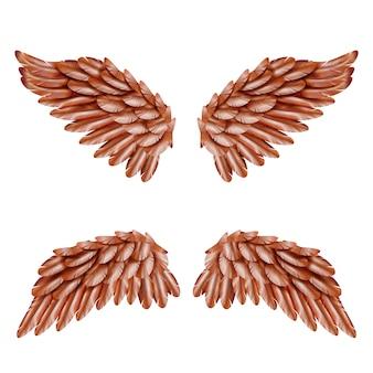 Set de alas de pájaro