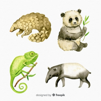 Set de animales exóticos y tropicales en acuarela