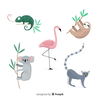 Set de animales tropicales: camaleón, koala, flamenco, perezoso, lemúr. diseño de estilo plano