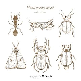 Set bocetos de insectos realistas dibujados a mano