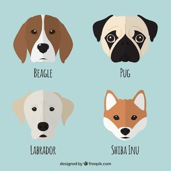 Set bonito de cuatro perros en diseño plano