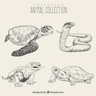 Set de bosquejo de reptiles