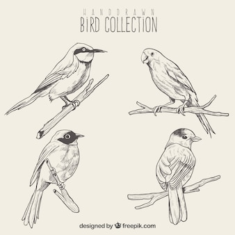 Set de bosquejos de aves