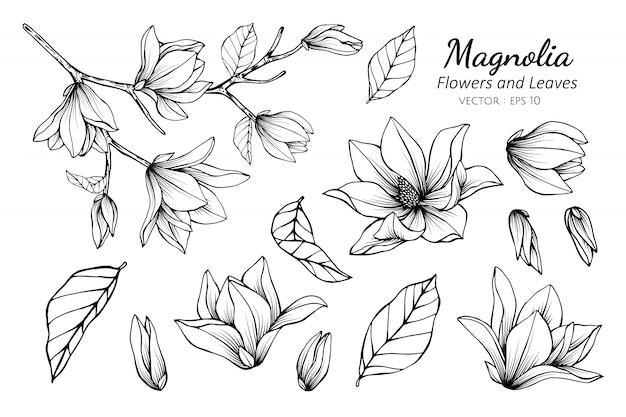 Set de colección de flor de magnolia.