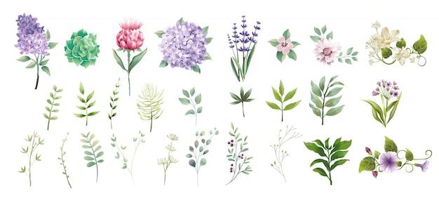 Set colección hojas verdes y flor estilo acuarela.