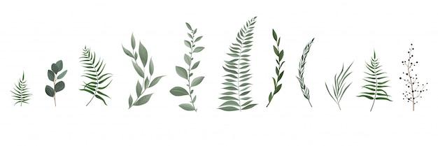 Set colección de hojas verdes hierbas en estilo acuarela.