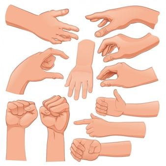 Set de manos humanas