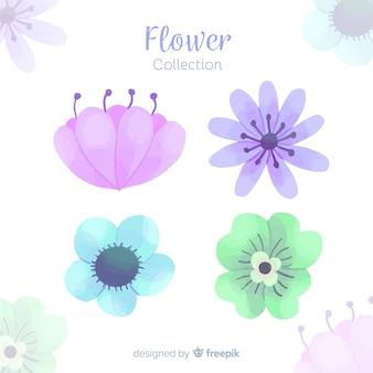 Set de elementos florales decorativos en acuarela