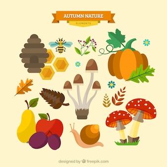 Set de elementos naturales de otoño