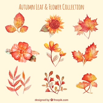 Set de flores y hojas de acuarela