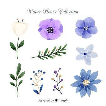 Set de flores de invierno en acuarela