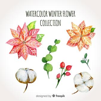Set de flores de invierno en acuarelas