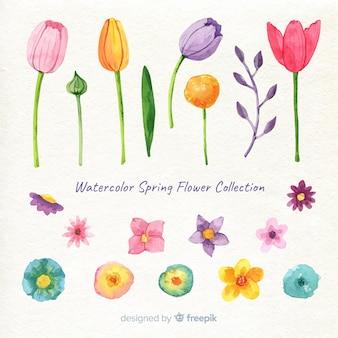 Set de flores de primavera en acuarela