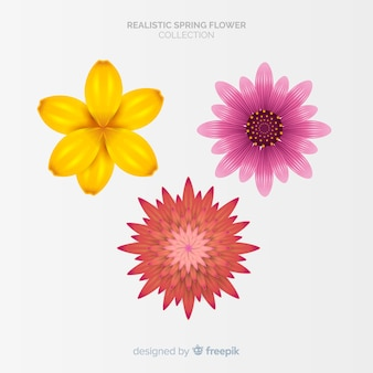 Set flores primavera coloridas