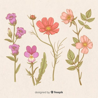 Set de flores vintage dibujadas a mano