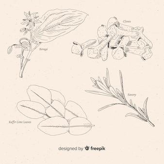 Set de hierbas aromáticas y especias