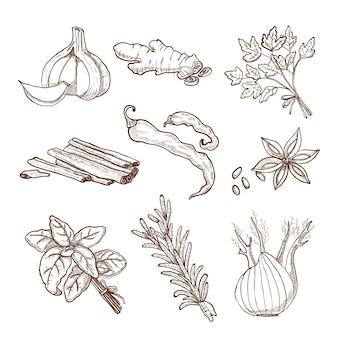 Set de hierbas y especias dibujados a mano