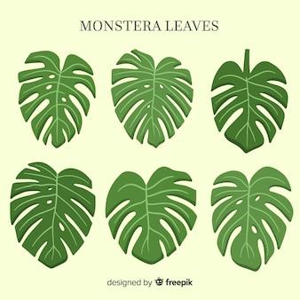 Set hojas de monstera acuarela
