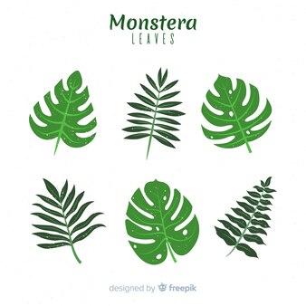 Set hojas monstera planas