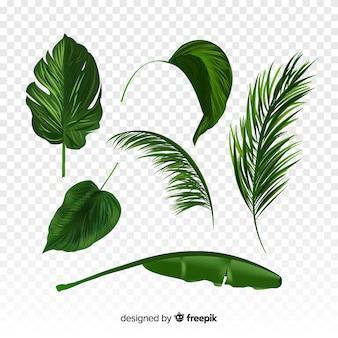 Set de hojas tropicales realistas