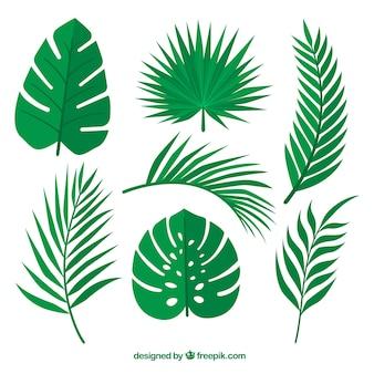 Set de hojas verdes de palmeras