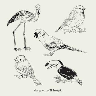 Set de pájaro exótico dibujado
