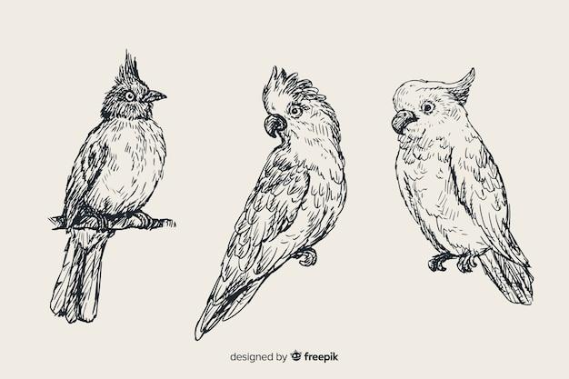Set de pájaros exóticos dibujados