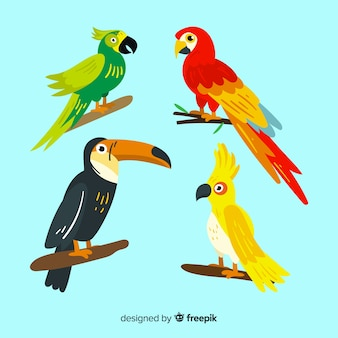 Set de pájaros exóticos