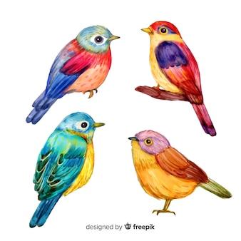 Set de pájaros tropicales en acuarela