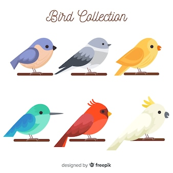 Set de pájaros