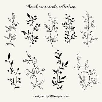 Set de ramas con hojas dibujadas a mano