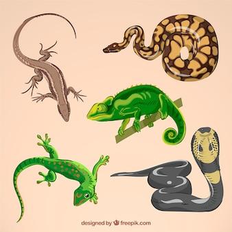 Set de reptiles dibujados a mano