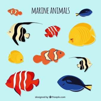 Set de vida marina