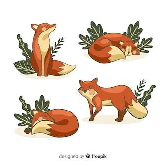 Set de zorros salvajes dibujados
