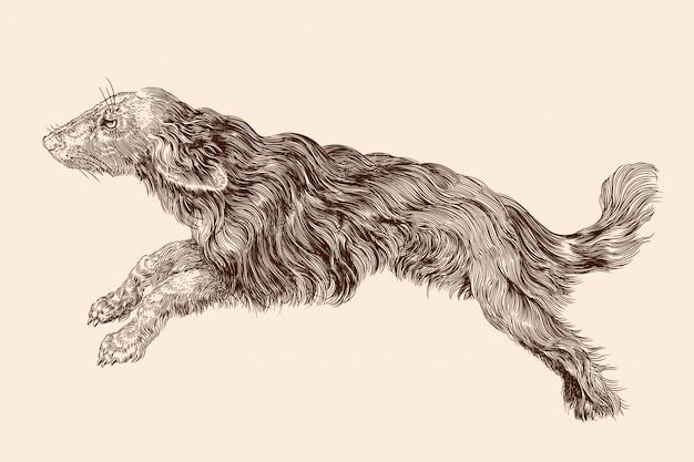Shaggy perro con el pelo largo en un salto. ilustración de vectores aislado sobre fondo beige.